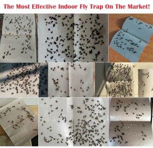 Sticky Fly Traps